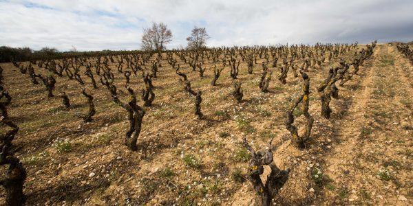 vinplante